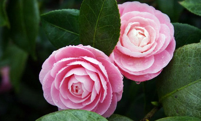Paradise Garden: $25 for $50 Worth of Flowers from Paradise Garden