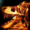 Dinosaur-Quest – Up to Half Off Admission