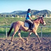 Up to 55% Off Horseback-Riding Lessons in Temecula