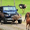 Up to Half Off Drive-Thru Zoo in Strawberry Plains