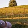 71% Off Wine Tour and Tasting for Four at LaVelle Vineyards