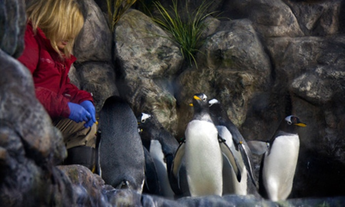 The Living Planet Aquarium - Sandy: $12 for a Penguin Encounter at The Living Planet Aquarium in Sandy (Up to $25 Value)