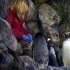 The Living Planet Aquarium – Up to 52% Off Penguin Encounter