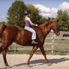 Half Off Horseback Riding in Clayton