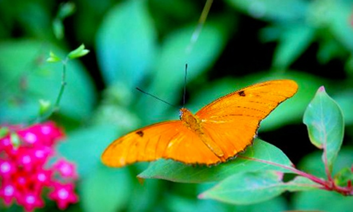 The Butterfly Estates - Fort Myers: Annual Membership to The Butterfly Estates. Two Options Available.