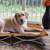 Carlson Portable Pup Travel Pet Beds