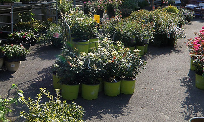 Blossom Nurseries - Yorktown Heights: $20 for $45 Worth of Perennials, Shrubs, Grasses, Trees, and Evergreens at Blossom Nurseries in Yorktown Heights