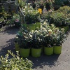 56% Off at Blossom Nurseries in Yorktown Heights