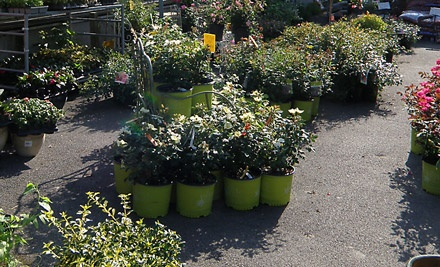 $45 Groupon to Blossom Nurseries - Blossom Nurseries in Yorktown Heights