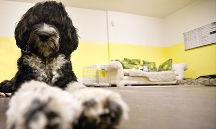 The Grateful Dog - Cow Hollow: $60 for Three Days of Doggy Day Care at The Grateful Dog ($120 Value)