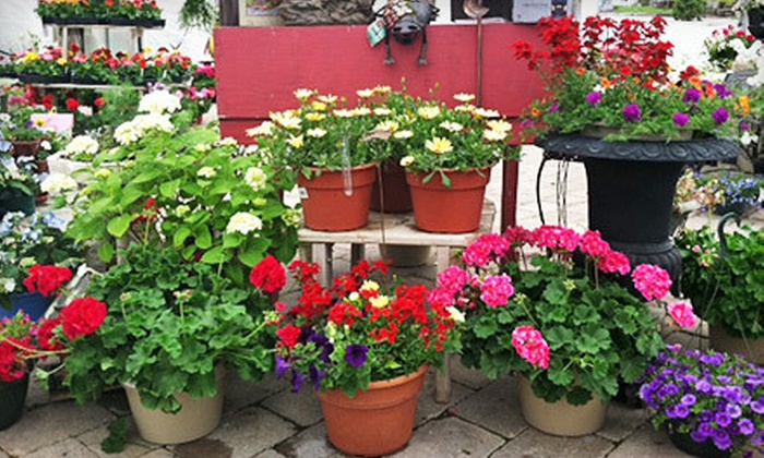 Mayfield Nursery Inc. - Grandview Estates: $15 for $30 Worth of Plants and Gardening Supplies at Mayfield Nursery Inc. in West Bend