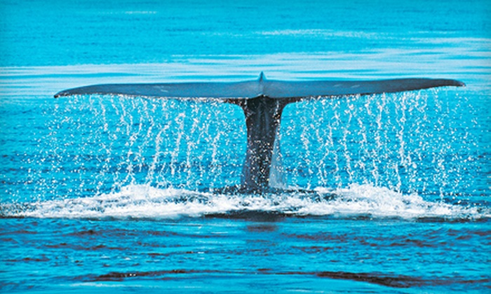 Island Divers Hawaii - Hawaii Kai: $58 for a Whale-Watching Tour with Photo DVD from Island Divers Hawaii ($129 Value)
