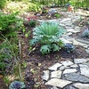 Urban Harvester: $75 for an Edible Landscaping Design Consultation from Urban Harvester ($150 Value)