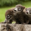 Up to 51% Off Visit to Summerfield Zoo