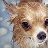 52% Off Dog Grooming in St. Clair Shores