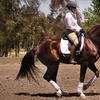 78% Off Horse Riding Lessons in Temecula