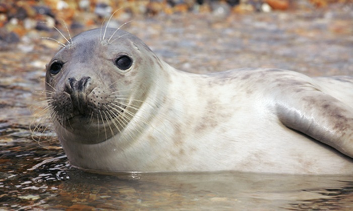 Prince Edward Tours - Queens Square: Seals and Shellfish Tour for Two Adults or Two Adults and Two Kids from Prince Edward Tours (55% Off)