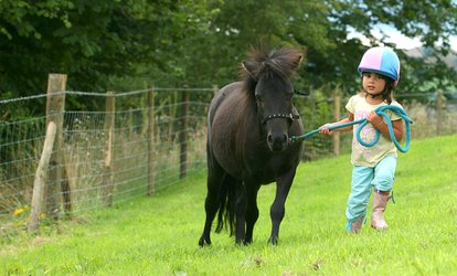 image for Children's Pony Care and Riding Experience from £10 at Lee Hill Riding School