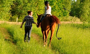 Tri Color Equestrian: Two Horseback-Riding Lessons at Tri Color Equestrian (50% Off)