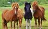 Online-Kurs Pferdesport