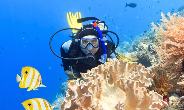 Aloha Dive - Winnetka: Scuba-Diving Certification at ALOHA  DIVE (45% Off)