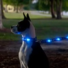 NCAA Medium LED Dog Collars