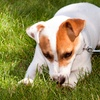 Up to 57% Off Dog Walking from School of Walk