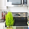 Up to 51% Off House Cleaning at Luminous Cleaning Services