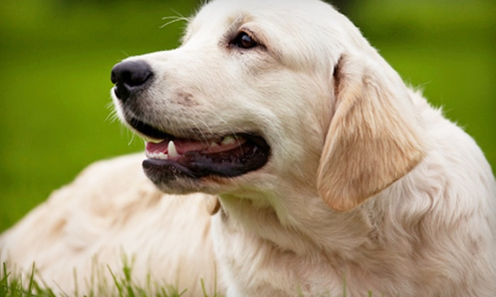 Pet Vaccination Services - San Antonio: $25 for One-Year Canine Rabies Package and Heartworm Test at Pet Vaccination Services (Up to $50 Value)