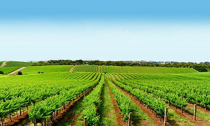 Yarra Valley Wine Tour Groupon