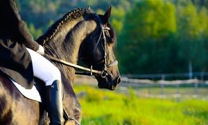 HORSE CLUB VILLA AIRAGHI: 5 o 7 lezioni di equitazioneper adulti o bambini alHorse Club Villa Airaghi a Vighignolo (sconto fino a 67%)