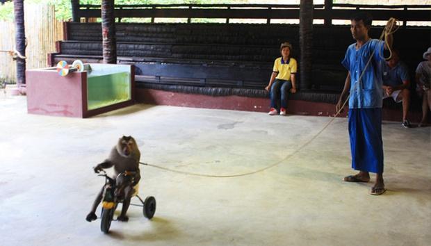 Phuket: Elephant Ride & Animal Show 3