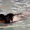 50% Off Dog Swimming Lessons
