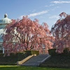 The New York Botanical Garden – Up to 18% Off a Spring Festival