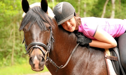 One-Hour Intro Horseback-Riding Lesson with Optional One-Hour Group Workshop at Zequestrian (Up to 55% Off)