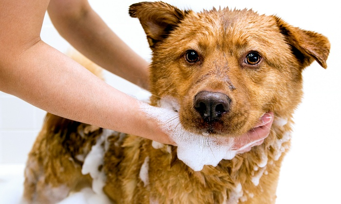 Pet Valu - Multiple Locations: Three or Six Self-Serve Dog Washes at Pet Valu (Up to 60% Off)