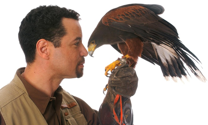 Mike Dupuy Falconry - Union Jack's British Brew Pub : 90-Minute Falconry Presentation for One or Two at Mike Dupuy Falconry on Saturday, April 26 (Up to 75% Off)