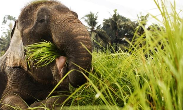 Bali: Admission to Bali Zoo 1