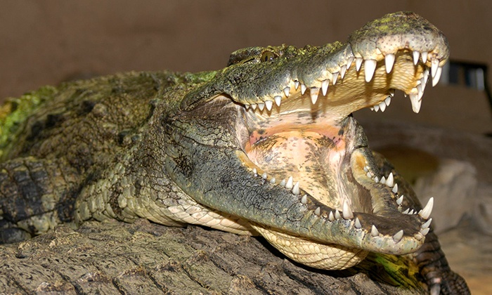 Reptilia - Reptilia: C$7 for a Reptile-Zoo Visit at Reptilia (Up to C$15 Value)