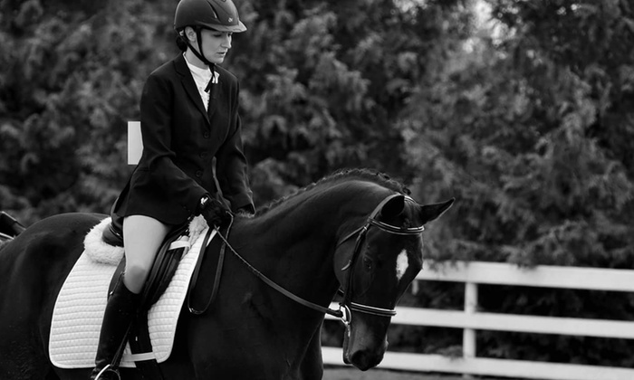 Island Equestrian Services - Island Equestrian Services: Four or Eight Horseback-Riding Lessons at Island Equestrian Services(Up to 54% Off)