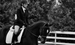Island Equestrian Services: Four or Eight Horseback-Riding Lessons at Island Equestrian Services(Up to 54% Off)
