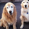 Up to 56% Off at Red Dog Pet Resort & Spa