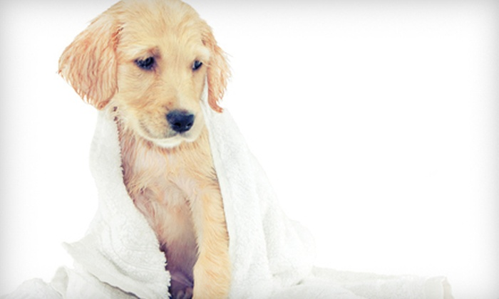 Bark 'N Bubbles  - Fairfax: $10 for a Self-Service Dog Wash plus a Blueberry Facial at Bark 'N Bubbles (Up to $32 Value)