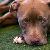 Up to 54% Off 2-Mile Walk for Animals Registration