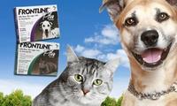 אמפולות פרונטליין פלוס לחתולים או לכלבים, להדברת ומניעת פרעושים, ביצי פרעושים וקרציות, החל מ-99 ₪ בלבד