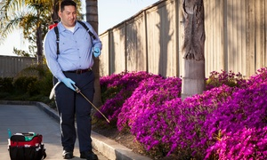 K & M Pest Solutions Inc: $39 for Exterior and Interior Pest Control Treatment from K & M Pest Solutions Inc ($125 Value)