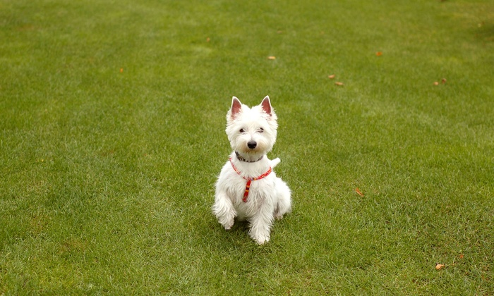 Pet Pooper Scoopers - Weatherford: Weekly Dog-Waste-Removal Services for 4 Weeks from Pet Pooper Scoopers (Half Off)