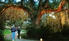 10 Ft. LED Outdoor Fairy Curtain Lights