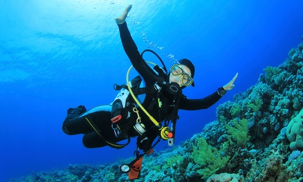 Two-Reef Snorkeling Trip, Discover Scuba Course, or Discover Scuba Pool Session at Dixie Divers (Up to 52% Off)