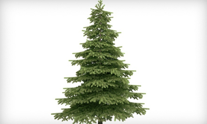 Norcal Carpet Cleaning - Southport: $54 for Christmas-Tree Removal with Disposal and Carpet Cleaning from Norcal Carpet Cleaning ($108 Value)